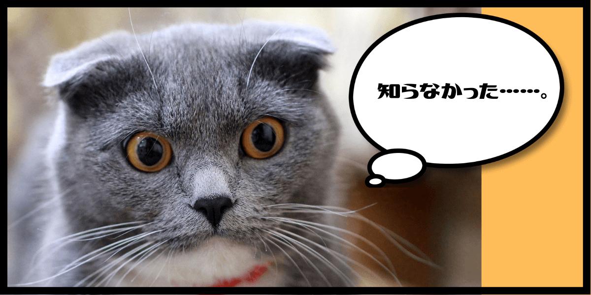 知らなかった衝撃を受ける猫