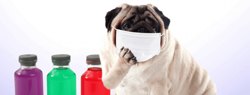 予防をしている犬の画像